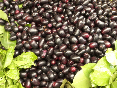 The Health Benefits Of Jambul Or Jamun - The Purple Summer ...  Guamuchiles
